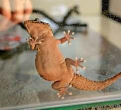 Hayvanlardan esinlenerek tasarlanan minyatür robotlar