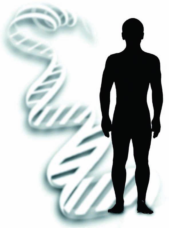 Bir hücre içinde sıkıştırılmış olan tüm DNA ucuca eklenirse 1,5 metre uzunluğuna erişir.