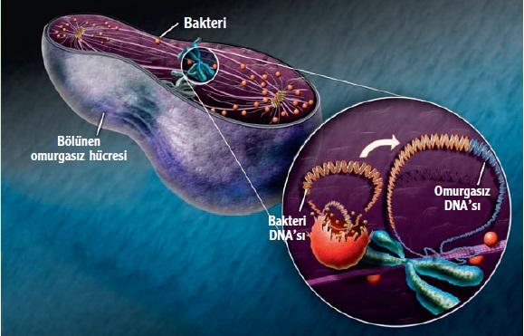 Genom İstilacısı Bakteriler