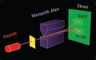 Şekil 1 Stern-Cerlach deney düzeneği. Kaynaktan çıkan atomlar düzgün olmayan manyetik alan bölgesinden geçerken spin manyetik momentlerinin değerine göre ayrışarak ekran üzerinde iki faklı öbek oluşturur.