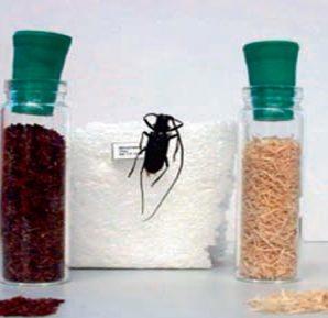 Yanmış-Ormanın-Bir-İlacı-da-Böcek-Dışkısı