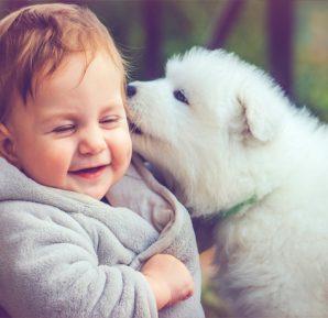 Bebeğinizi evcil hayvanınızla tanıştırın