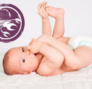 Akrep Bebeği (23 EKİM – 23 KASIM)