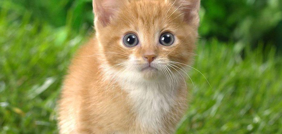 Kedi Fobisi