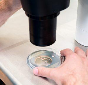 Kısırlığa kök hücre tedavisi