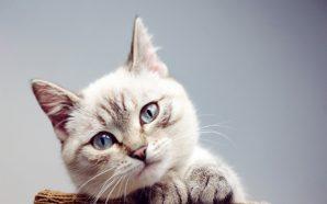 Bir Kedinin Gizli Dünyası