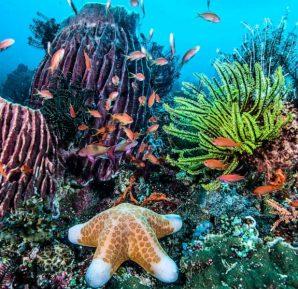Filipinler'i çevreleyen mercan resifleri